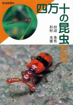画像1: 四万十の昆虫たち